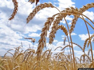крестьянско-фермерского хозяйства
